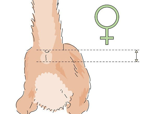 как определить пол месячного котенка