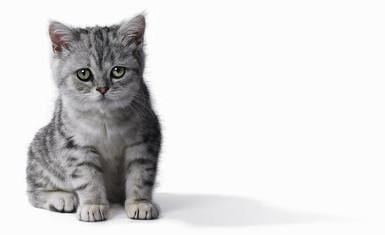 как различить пол котенка
