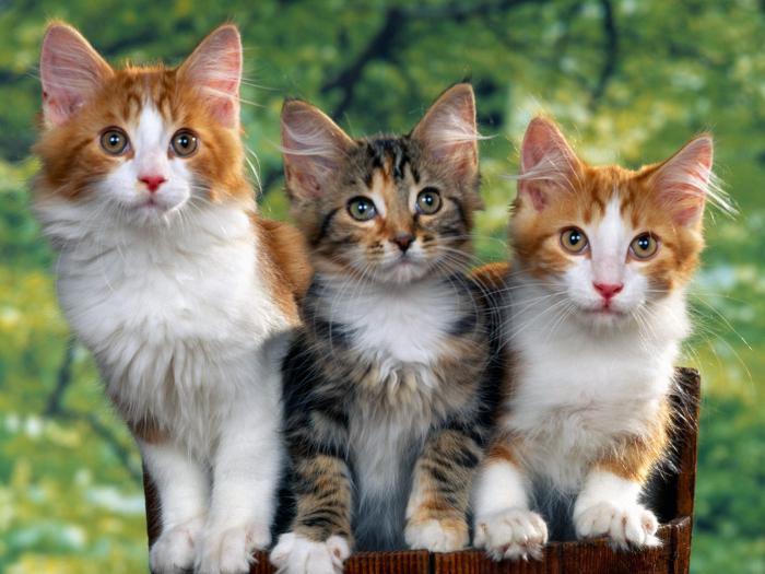как долго коты знакомятся