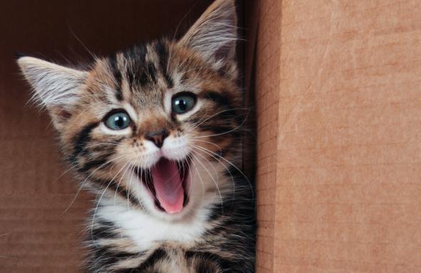 У котенка выпал зуб