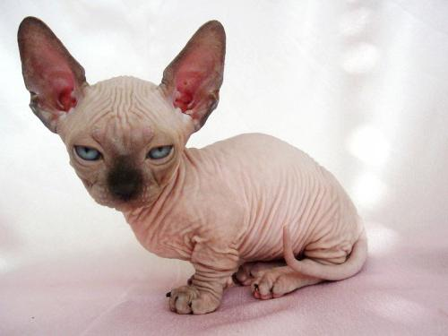 мини кошка