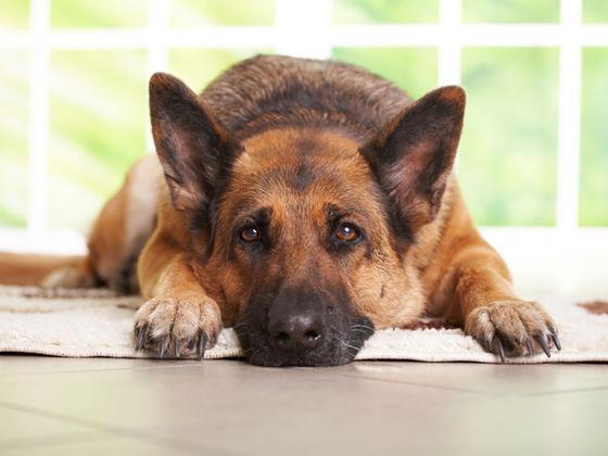 Собака ест свои экскременты что делать