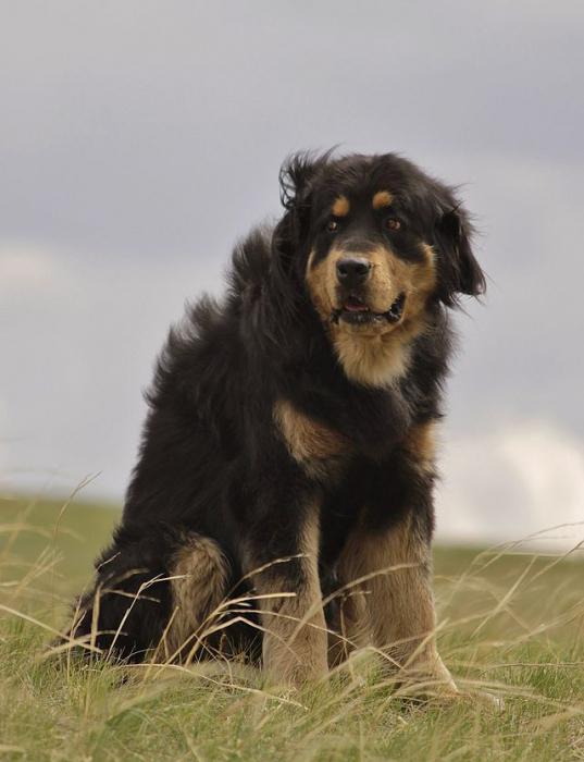 крупные породы собак с фотографиями