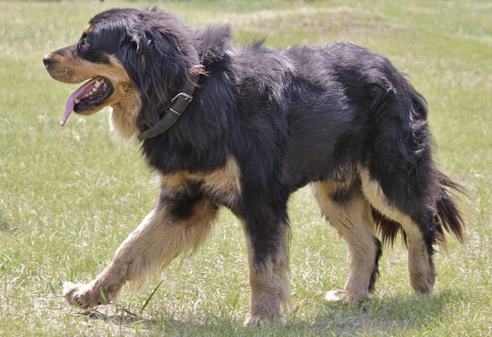 крупные собаки породы название