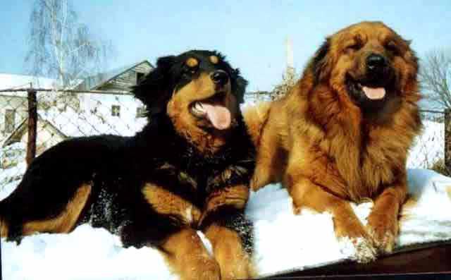 крупные собаки