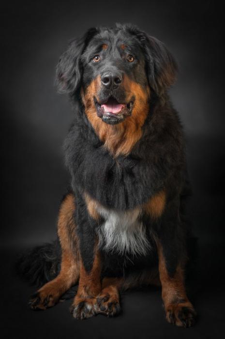 собаки крупных размеров