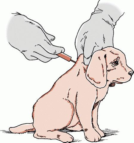 прививки обычно щенки