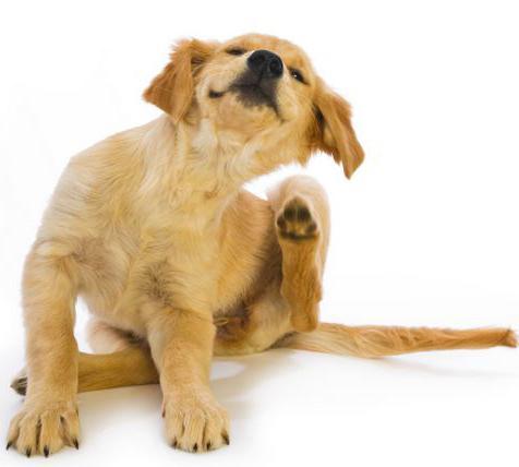 лечение лишая в домашних условиях у собак