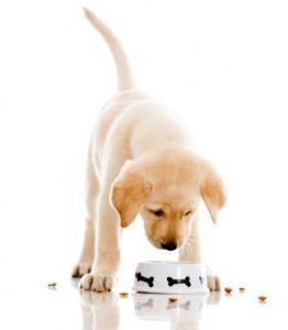 Чем кормить щенка лабрадора 2 месяца