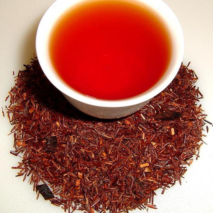 Чай ройбуш свойства и противопоказания
