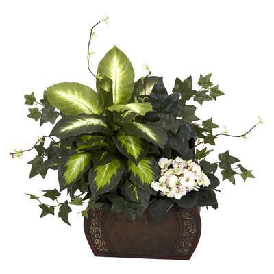 Цветок диффенбахия можно ли держать дома