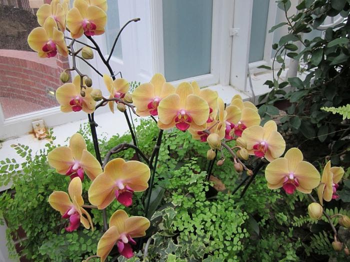удобрение для орхидей форте инструкция
