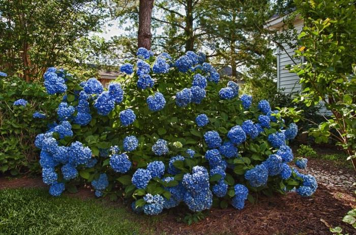 Цветы и кустарники для сада фото и названия