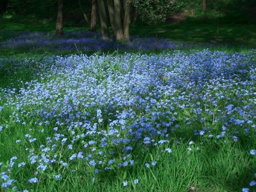 Цветы резеда фото