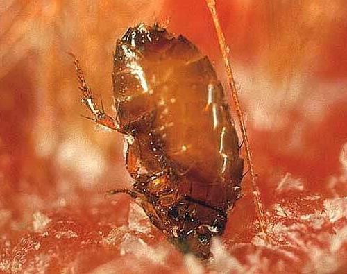 кашель от паразитов у детей симптомы
