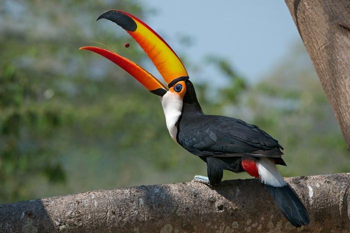 птицы с большим клювом названия полнолуния