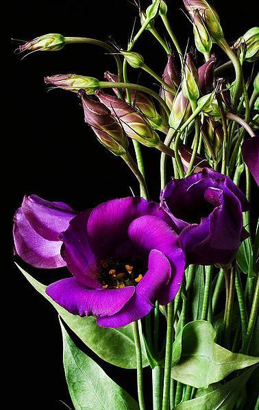 Цветы похожие на розы но не розы