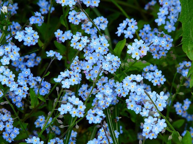 полевые и луговые цветы названия