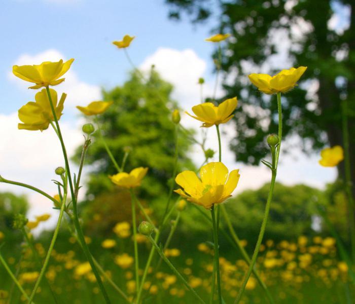 названия и картинки полевых цветов