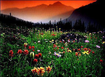 название полевых цветков