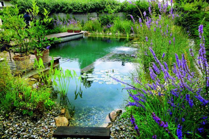 строительство прудов для разведения рыбы