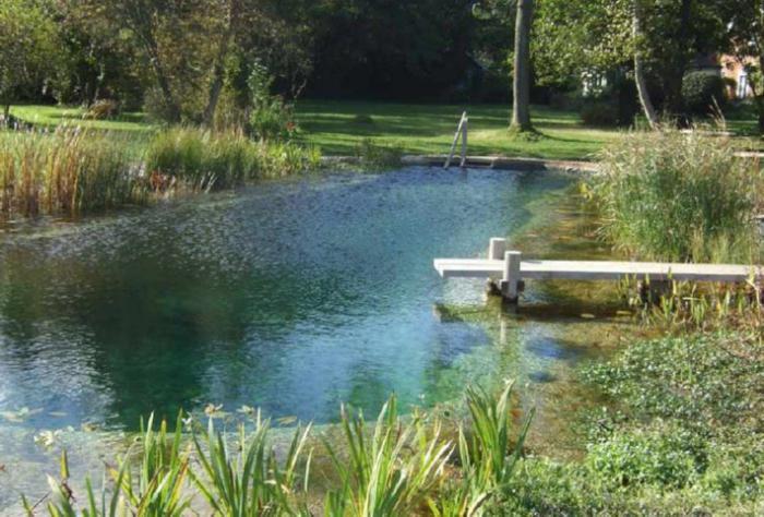 искусственный пруд для разведения рыбы