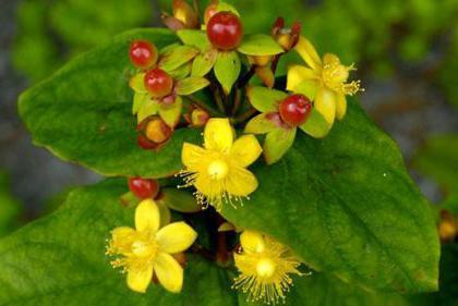 растения на повышения потенции