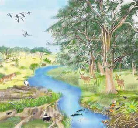 система действий за экологическим состоянием окружающей среды