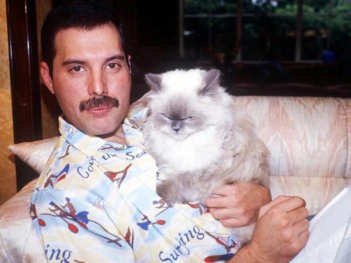 Мужчина любит кошек психология