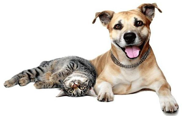 Ауризон Инструкция По Применению Для Собак