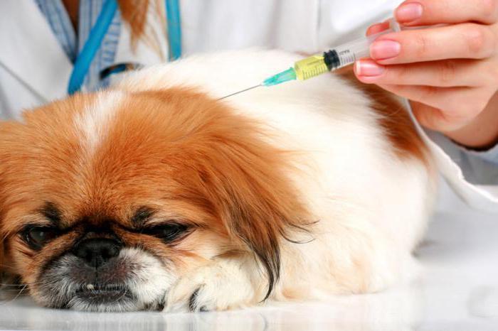 почечная недостаточность у собак прогноз