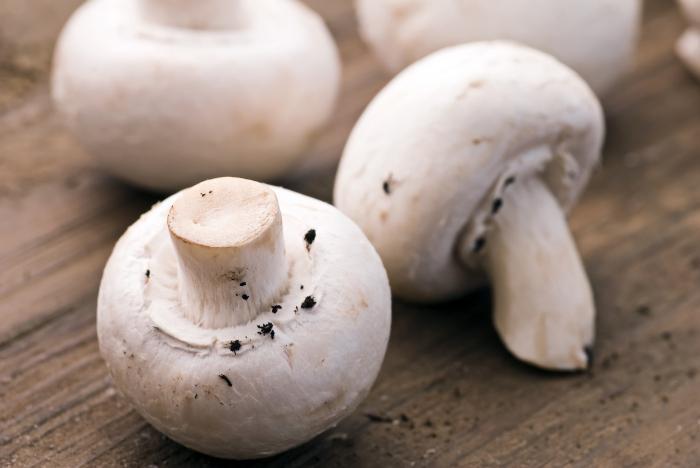 виды и названия грибов с фото