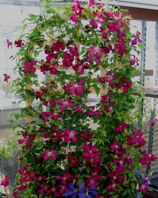 Как сделать опору для вьющегося растения