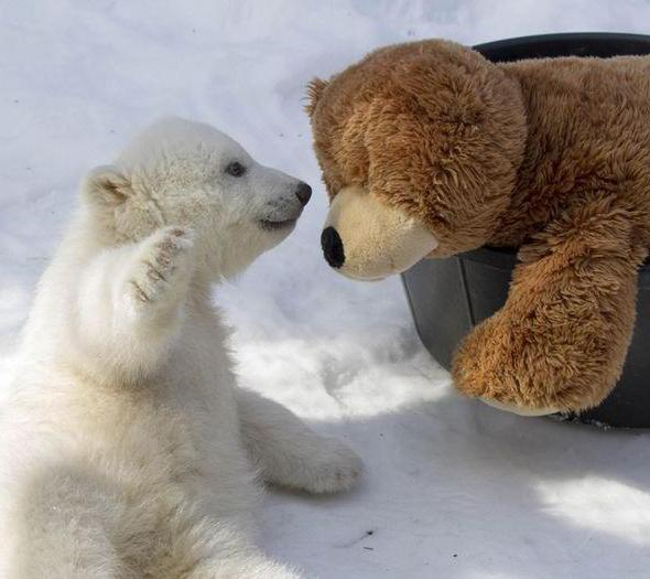 знакомство для медведей