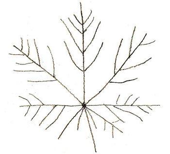 как рисовать кленовый лист поэтапно
