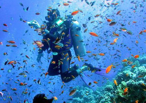 занятие знакомство с рыбами