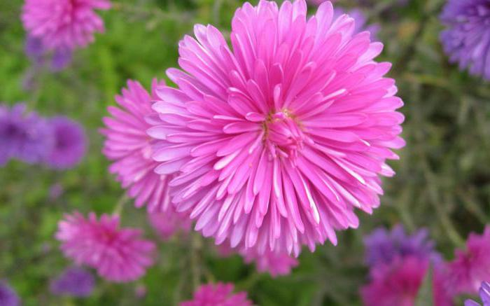 Цветы разновидности