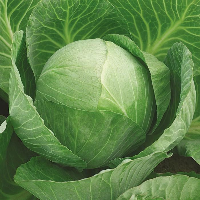 Then plant cabbage