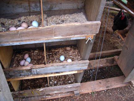بناء قن الدجاج