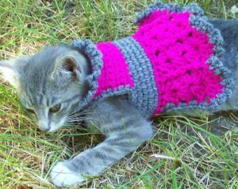 одежда для кошек крючком