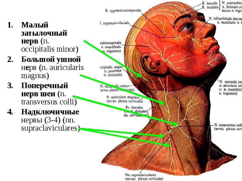 Big ear nerve