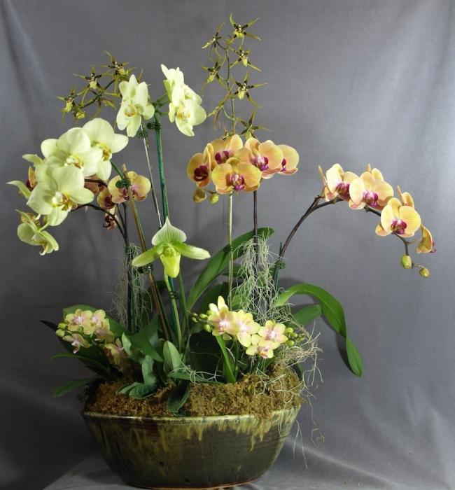Цветок орхидея уход и пересадка