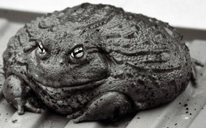 мама самые большие жабы в украине фото свадебный фотограф выполнит