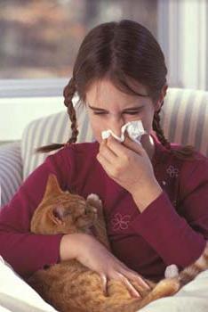 от аллергии на кошек алкоголь