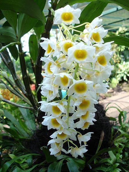 орхидея отцвела что дальше