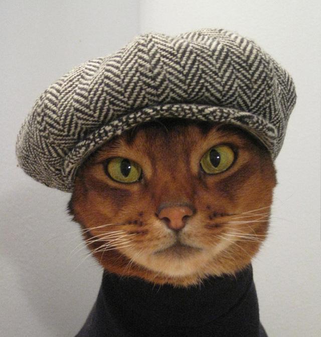 Купил своему коту шапку