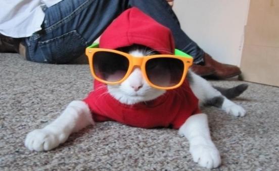 кот в очках и шапке