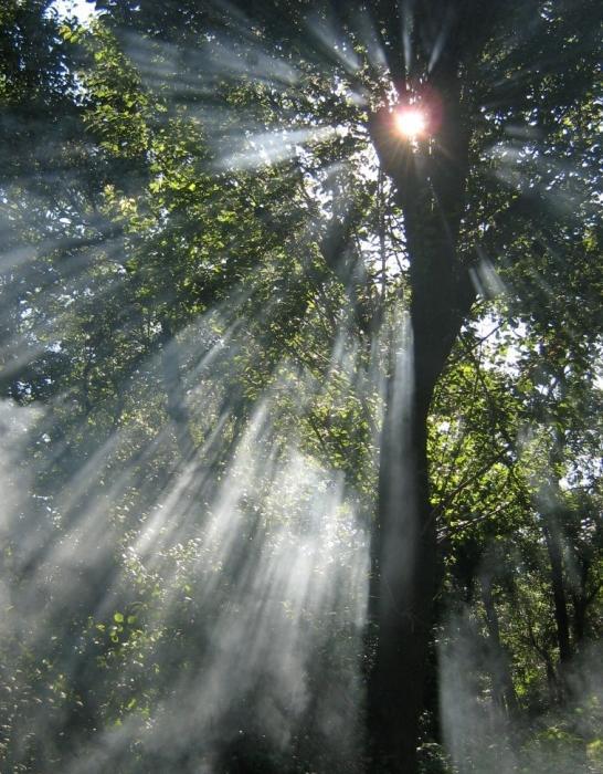 солнечные лучи,