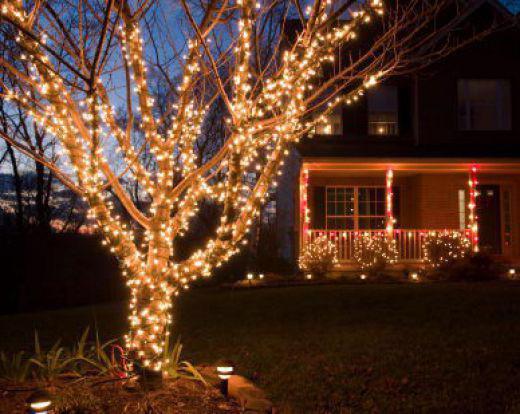 светящиеся деревья