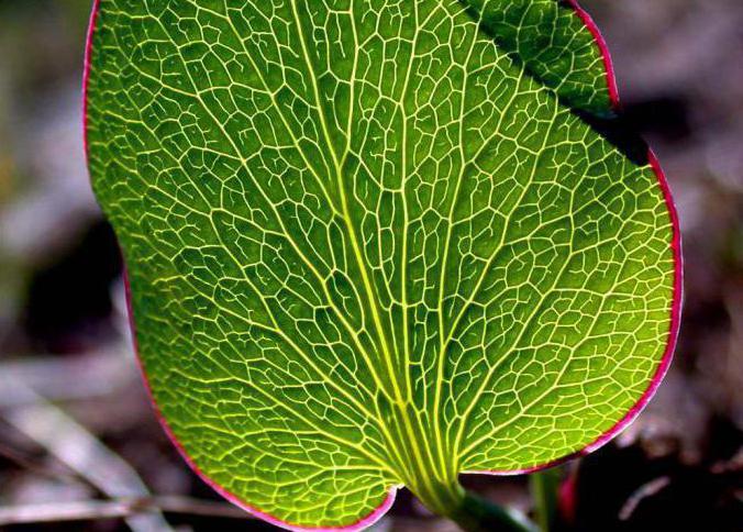 картинки параллельных листьев многими свою универсальность